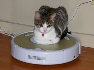 A cat laying upon a Roomba